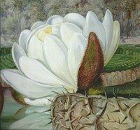 Tropische Seerose, gemalt von Marianne North