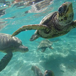 Turtles at Guanaja Divers, Honduras