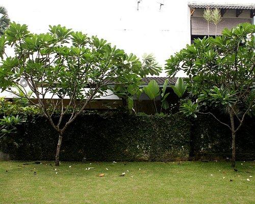Lush, tranquil garden