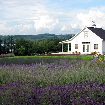 Lavender Field and Drying Barn at Lockwood Lavender Farm