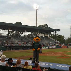 The GreenJacket Mascot, a very large bug