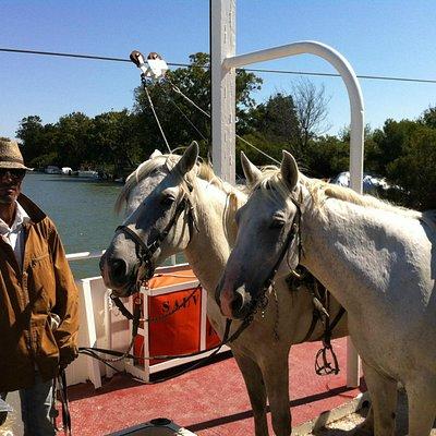 Joël et ses chevaux camarguais (dont Pablo, le mien !)