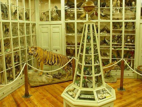 Sala Antica di Ornitologia