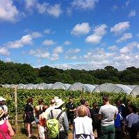 Vineyard Winemakers Tour & Tasting
