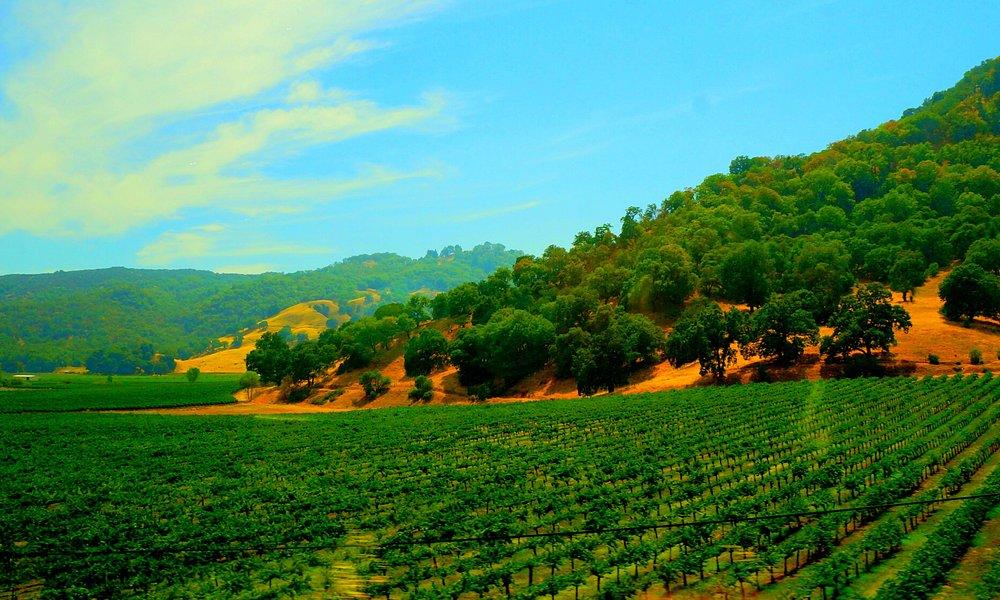 scenic wine yard