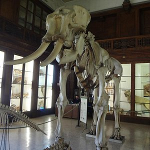 Museo di Zoologia