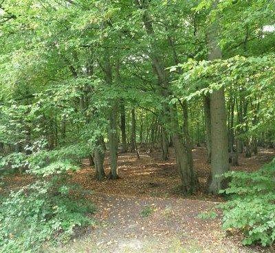 forêt de Clairmarais