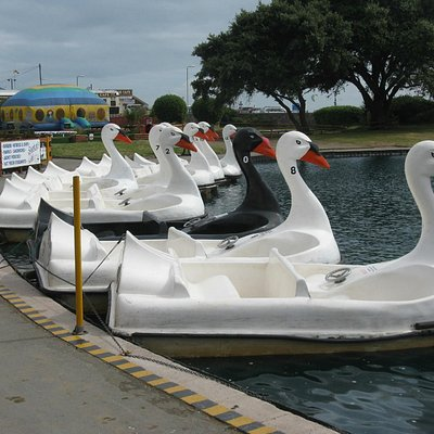 Swans ready to go peddling