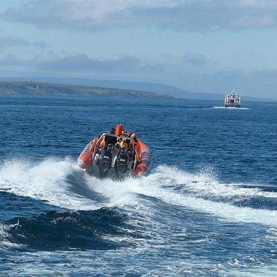 Pentland Firth Sea-Safari
