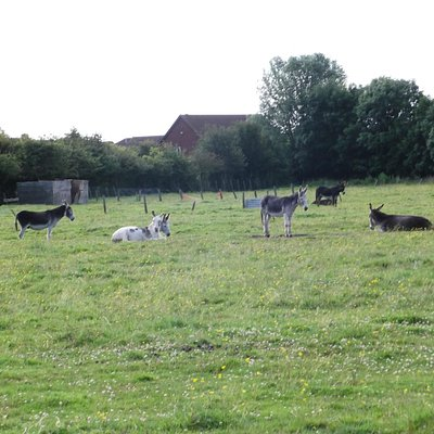 Cleethorpes Donkeys on a rest day