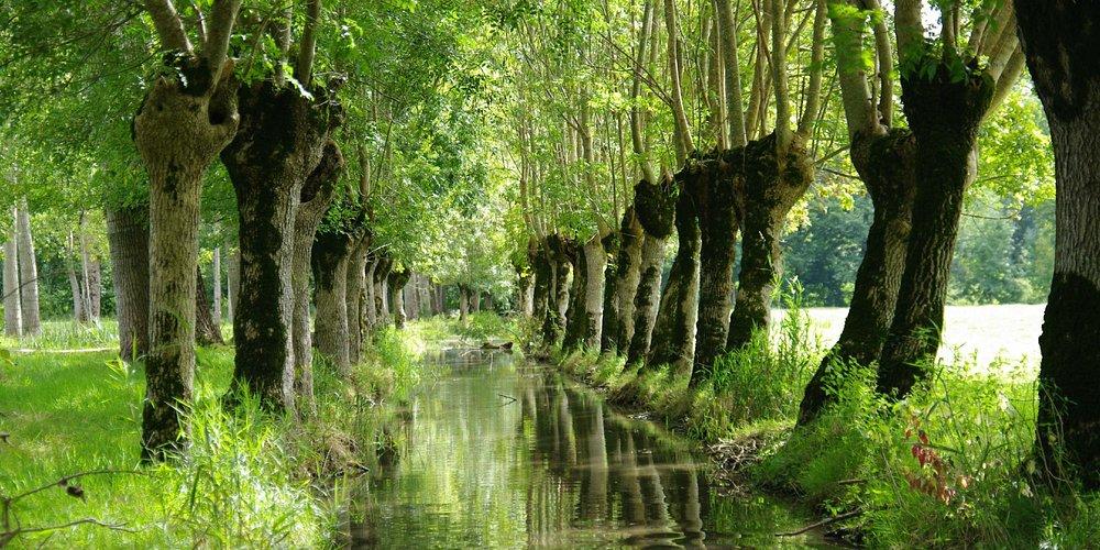 Entrez dans le Marais Poitevin