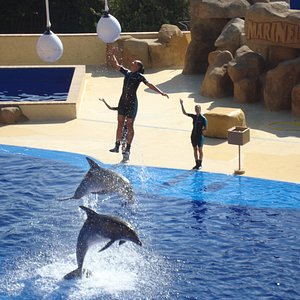 Spectacle des dauphins