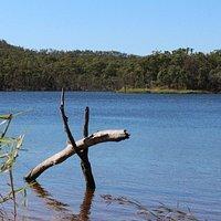 Log at the dam