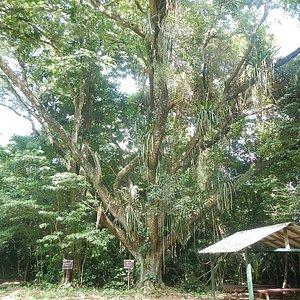 Guanacaste park