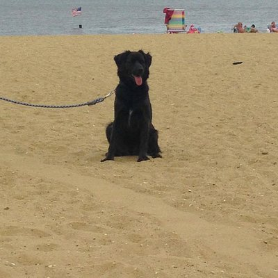 Bear on the beach