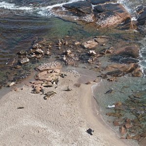 Seal Lions on the rocks at Point Labatt May 2014