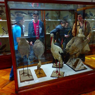 THE ORNITHOLOGICAL COLLECTION