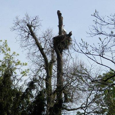 cicogna nel nido