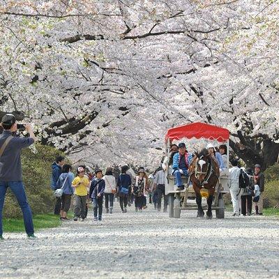 Tenshochi Park (1) Iwate Prefecture, Japan