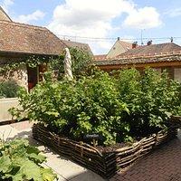 Le jardin de la Chartreuse