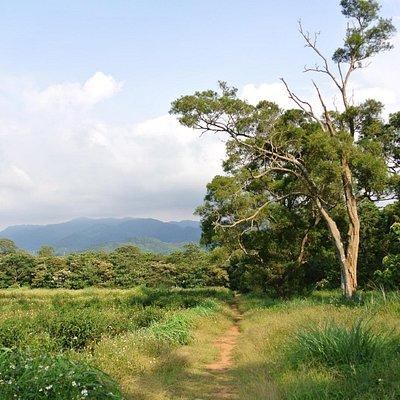 山頂には良質の樹木が多数伸びる