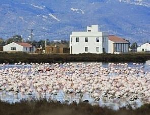 Los flamencos delante de MónNatura Delta de l'Ebre