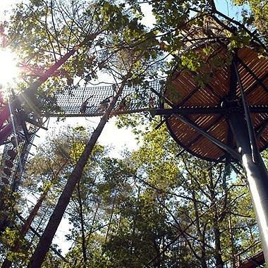 Notre sentier dans les arbres