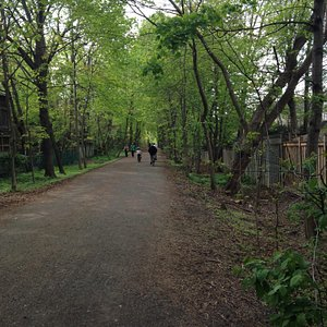 Relaxing walk on the belt line trail
