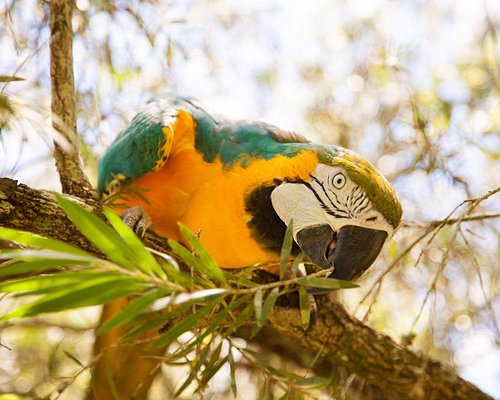Bird Gardens of Naples