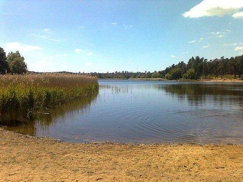 Frensham 'Little Pond'
