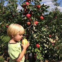 Picking apples at the orchard