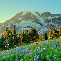 Wildflowers & Mount Rainier  from Paradise. Early September