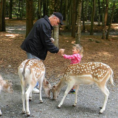 Wow...the deer are so big.