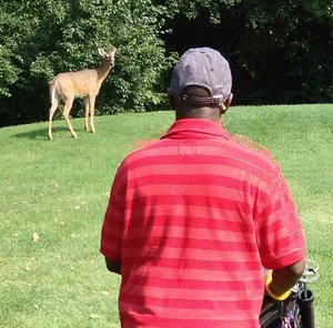 Golfers and deer watch each other.