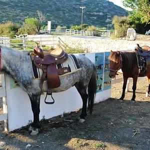 """Cavallo """"Skyriano"""" sellato"""