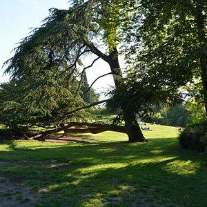 Descanso entre árvores