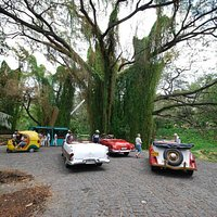 Classic Cars in Havana Forest