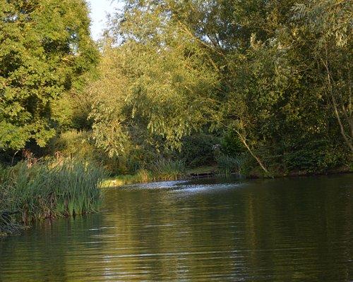 Kingfisher lake cheshire fishing at lloyds meadow