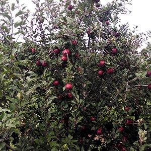 Apple across from Barber's