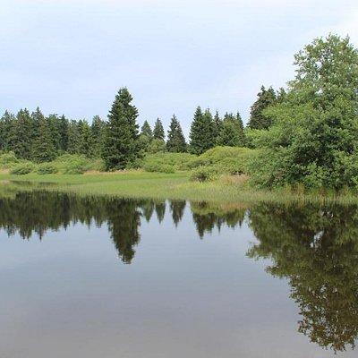 Forellenteich im Hohen Vogelsberg