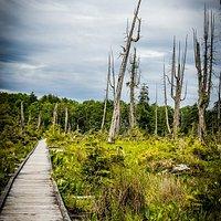 Boardwalk and landscape Alert Bay Ecological Park
