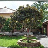 The Dhamma Garden