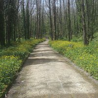 Uno dei tanti viali nel verde del bosco dei Camaldoli
