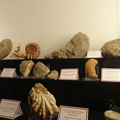 Wide range of collections:  fossils (i.a Triassic ammonites) )
