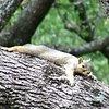 kittysquirrel
