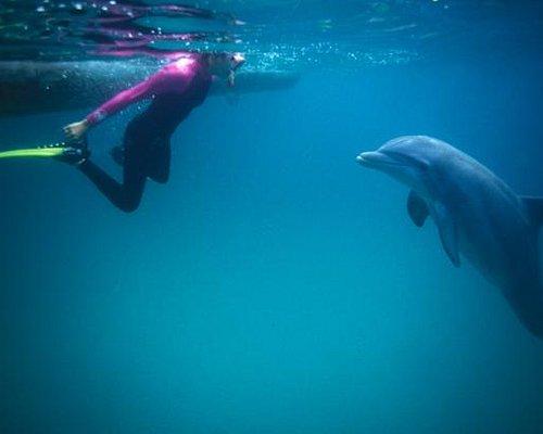 Wild Dolphin Encounter