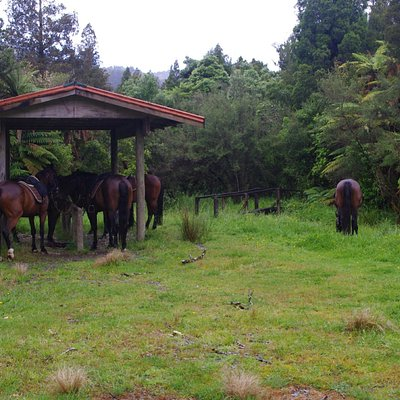Stopping for tea and biscuits, the horses take time out too.