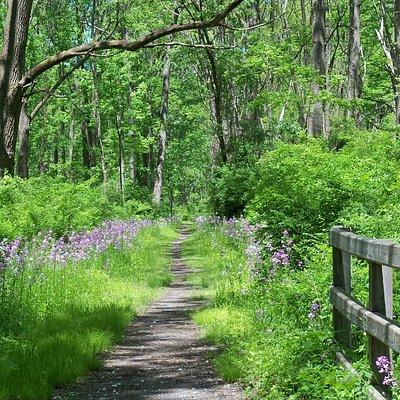 Catharine Valley Trail (near Millport trailhead)