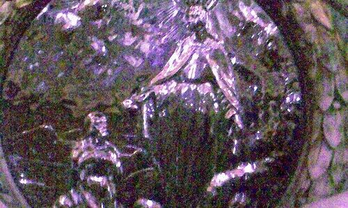 sotto la statua della Madonna, dietro all'altare