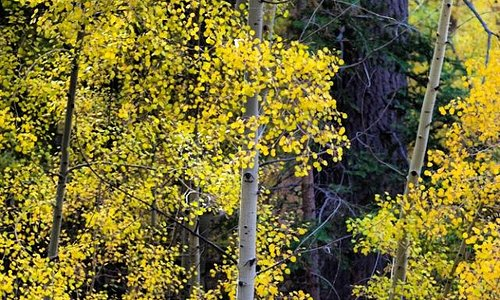 Beautiful fall foliage in Big Bear Lake, CA.